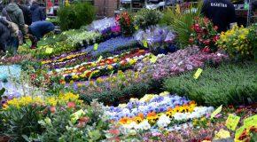 Bloemenmarkt (Europalaan)